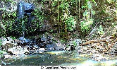 Curtis Falls in Mount Tamborine rain forest in Gold Coast...