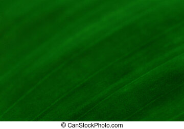 Curve line in texture of leaf
