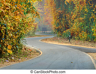 curve of the colorful road in forest