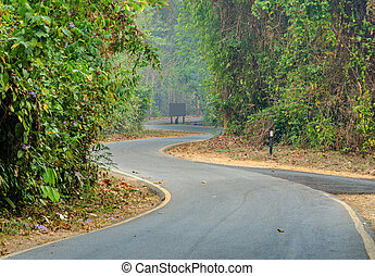 curve of the road in forest