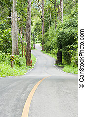 Curve road in the forest.