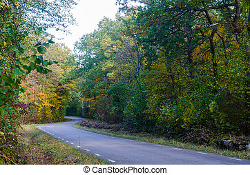 Curved country road in fall season colors