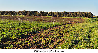 Curved edge of field