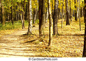 Curved path in autumn forest