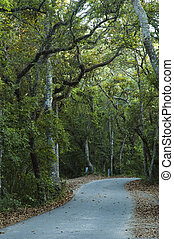 curving campground road leading into the overhanging woods