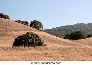 curving foothills