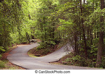 Roads curving through a forest