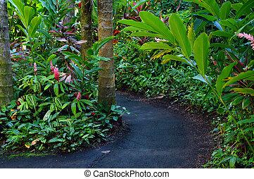 Curving nature walk