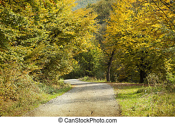 Curving road in autumn forest