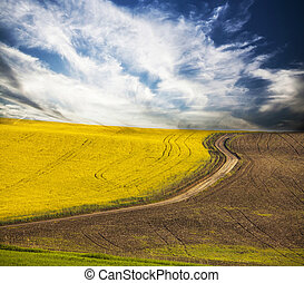 Curving road in rape field