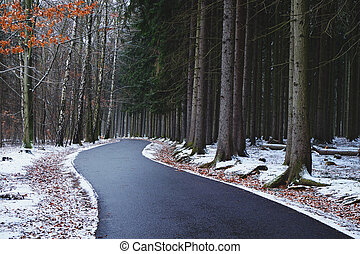 Curving road through a forest on a winter day