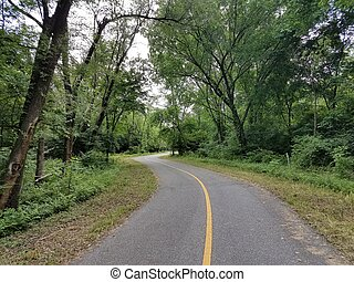 curvy bike trail in the woods