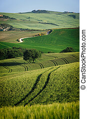 Curvy lines in Tuscany