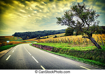 Curvy road at autumn sunset. Alsace, Wineroad - Curvy road...