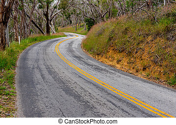 Curvy road with double yellow lines in forrest