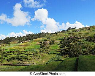 cusco, campo, vale, sagrado, agrícola