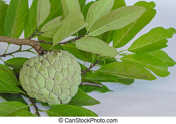Custard apples or Sugar apples - Custard apples, Sugar...