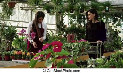 Customer Shopping Buying Flower And Plant In Flower Shop