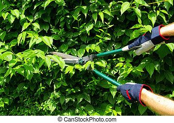 cut a hedge 10