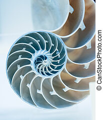 Cut away of Nautilus shell