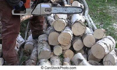 cut birch firewood in farm