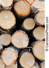 Cut Birch Logs Background