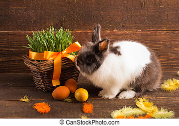 cut bunny