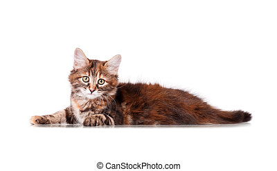 Cute young cat isolated on white background