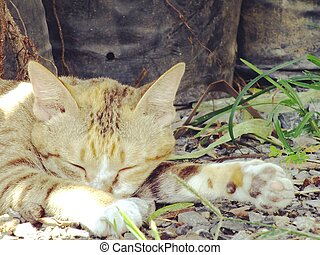 cut cat sleeping on the ground