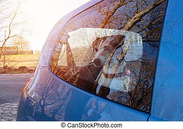 Cut dog puppy left alone in locked car