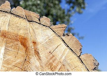 cut down a tree, close-up