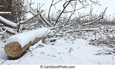 cut down winter tree branch in snowing forest swamp dry...