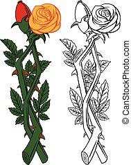 cut flower pink rose