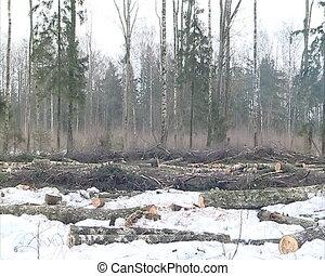 cut forest birch smoke