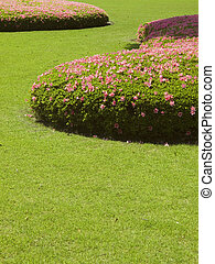 cut grass lawn with bushes - fresh green short-cut grass...