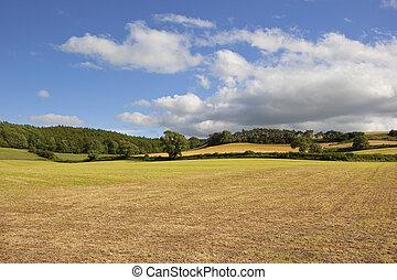 cut hay field in summer