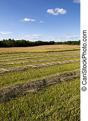 Cut Hay in Farm Field