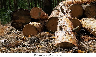 Cut Logs are Stacked in a Forest