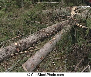 Cut logs in forest and special cargo truck. Forest cleaning operations.
