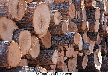 Cut logs up close