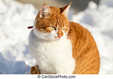 Cut red-white cat playing on white snow surface. Sunny beautiful winter day. Close up.