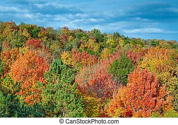 Cut River Autumn Color