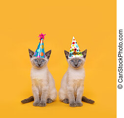 Cut Siamese Party Cats Wearing Birthday Hats - Siamese Party...