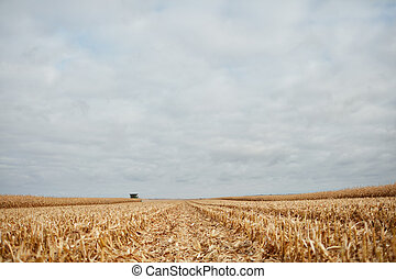 Cut stubble and chaff in a harvested corn field viewed at a...
