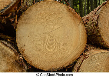 cut surface of a spruce clearly shows growth rings - The cut...