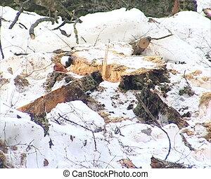 cut tree trunk stump