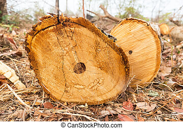 cut trees in forest