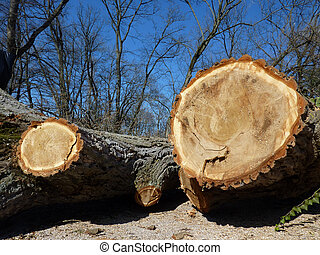 Cut trunks by winter