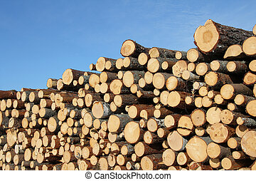 Cut Wooden Logs and Blue Sky - Stack of cut timber logs ...