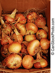 onion in the box